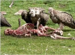 ميت تأكله الطيور